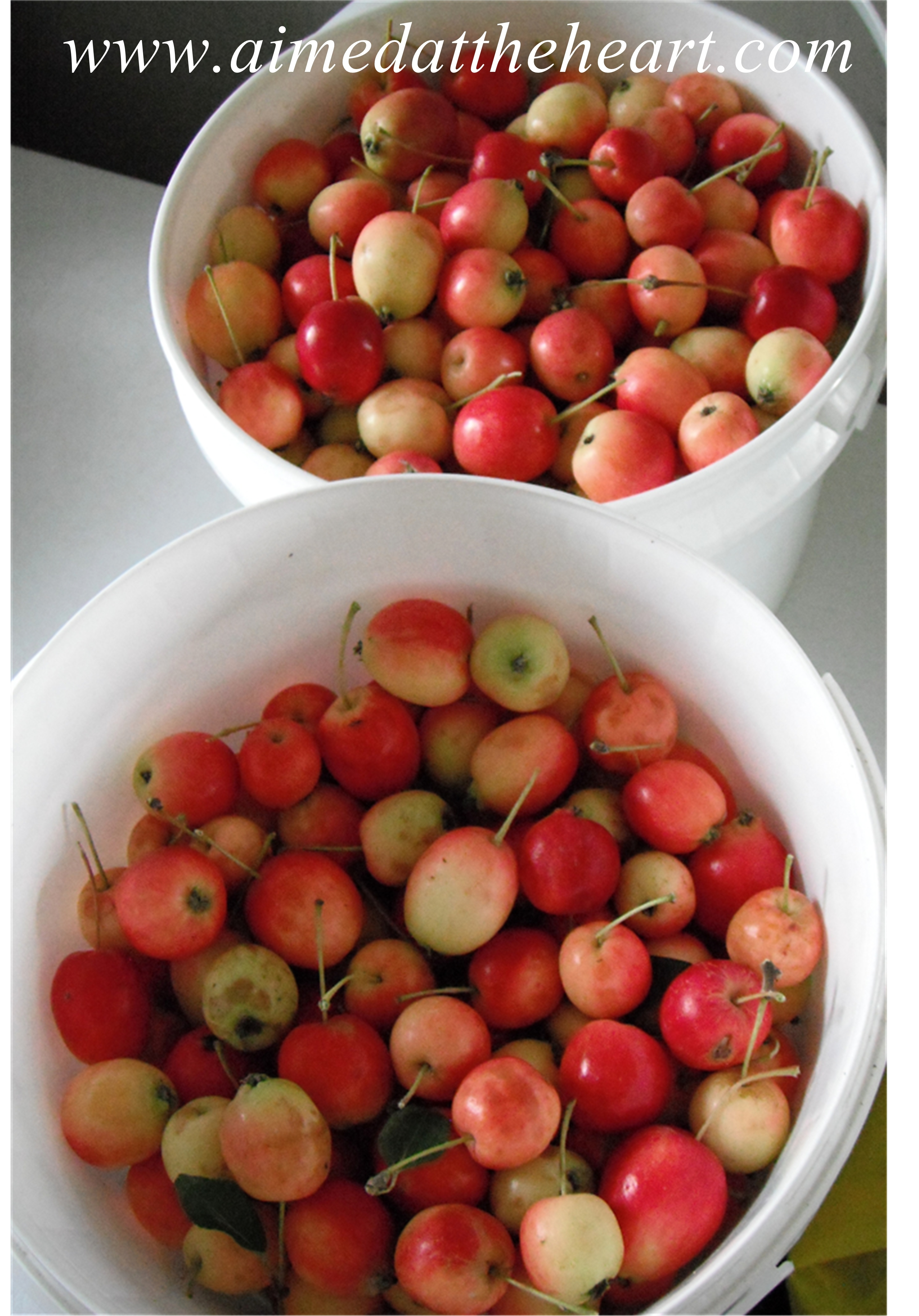picking crab apples for apple butter
