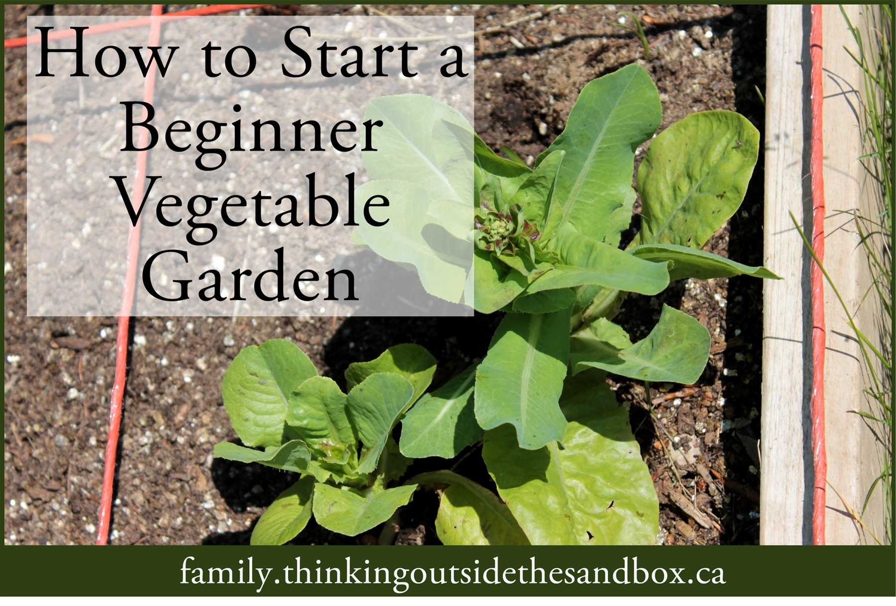 How To Start A Beginner Vegetable Garden Aimed At The Heart